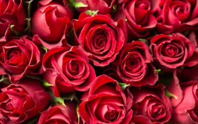 Offres de la Saint Valentin